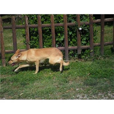 Comune di CAIVANO - cane - Microchip 380260080048320