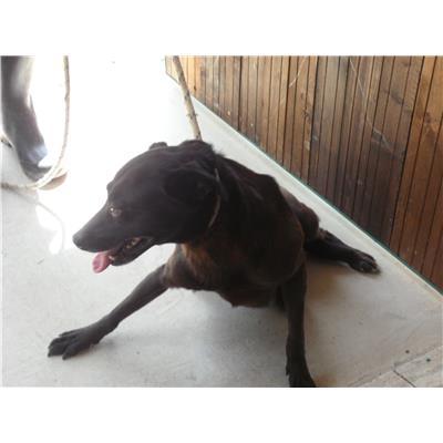 Comune di CAIVANO - cane - Microchip 380260080044794