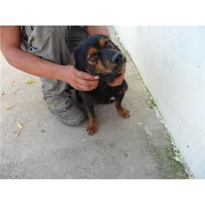 Comune di CAIVANO - cane - Microchip 380260080102447