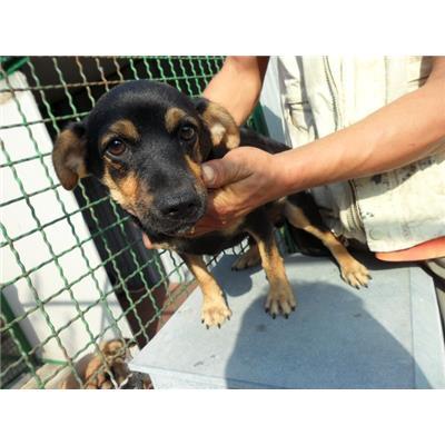 Comune di CAIVANO - cane - Microchip 380260080102682