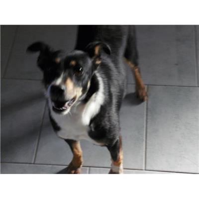 Comune di ERCOLANO<br />cane - Meticcio<br />380260010308565