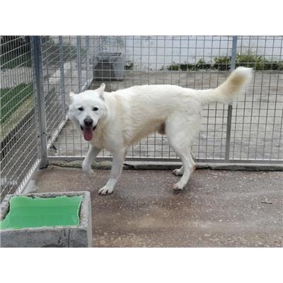 Comune di NAPOLI<br />cane - Meticcio<br />380260080091050