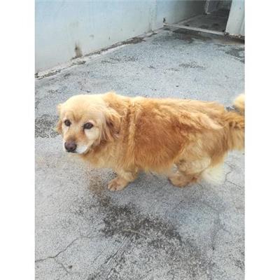 Comune di CAIVANO - cane - Microchip 380260004018103